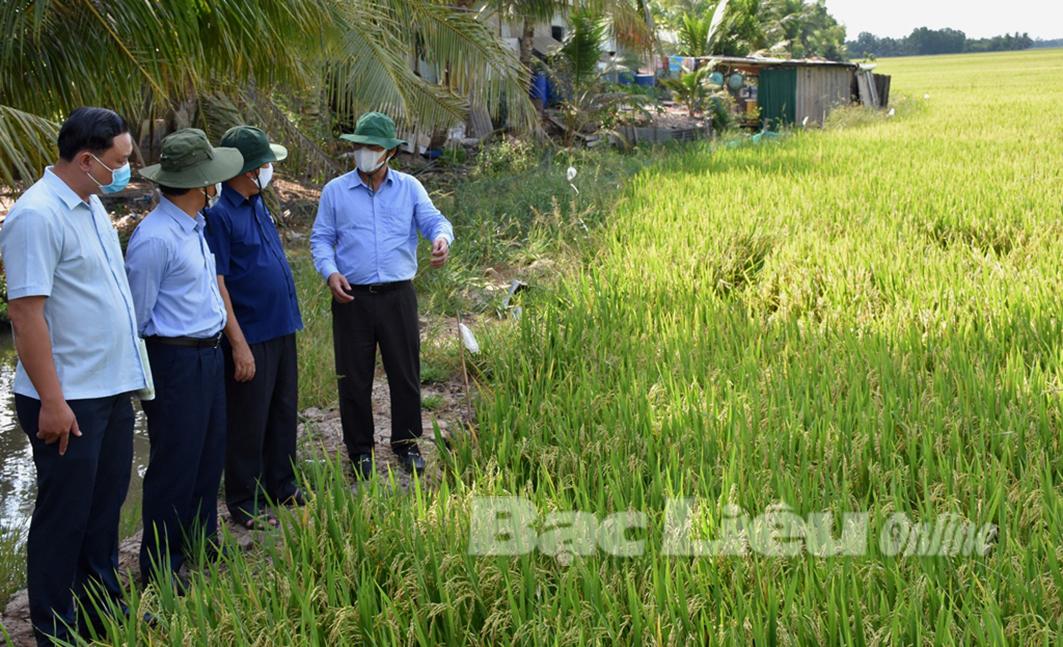 Chủ tịch UBND tỉnh - Dương Thành Trung kiểm tra tình hình sản xuất ở Thị xã Giá Rai, huyện Phước Long và Hồng Dân