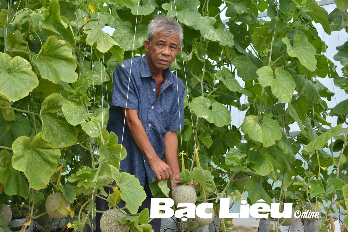Ông Lữ Tấn Kía: Thành công từ mô hình trồng dưa lưới