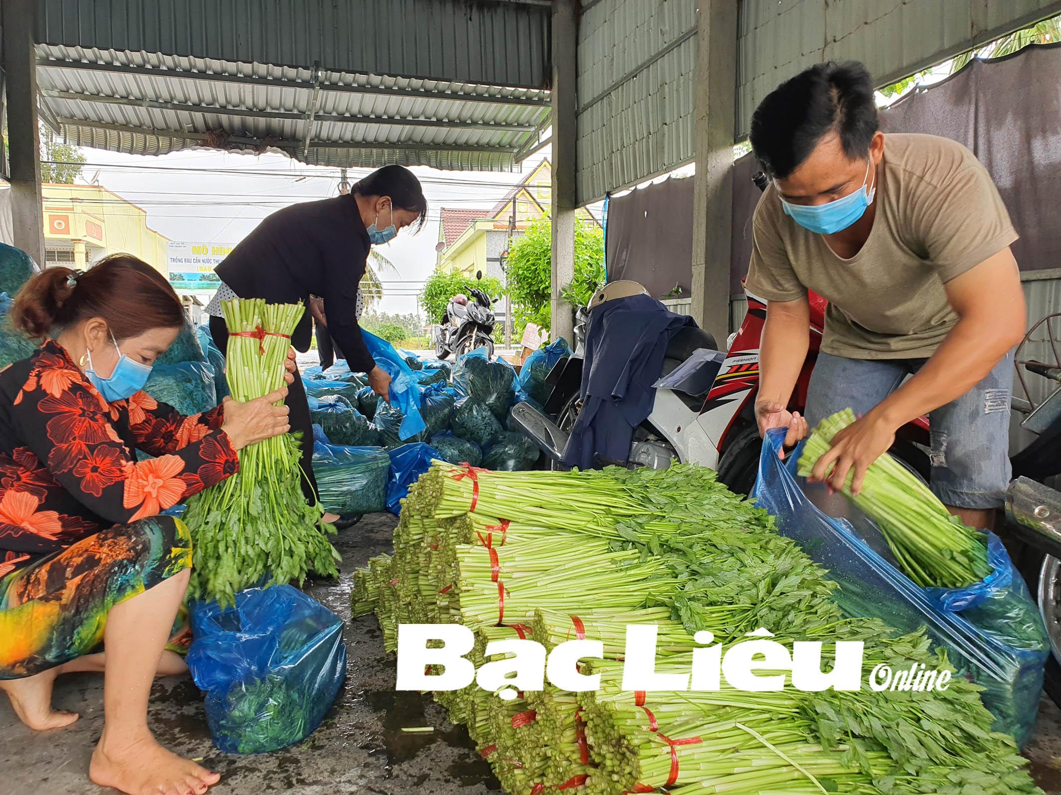 Nông dân Bạc Liêu: Đồng lòng phòng chống dịch, yên tâm sản xuất